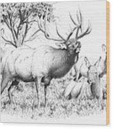 Bull And Harem Wood Print