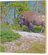 Bull Bison Near Mud Volcanoes In Yellowstone National Park-wyoming Wood Print