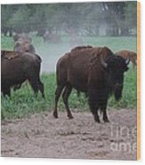 Bull Buffalo Guarding Herd With Green Grass Wood Print