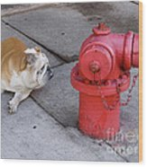 Bull Dog And The Fire Hydrant Standoff Wood Print