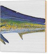 Bull Dolphin Wood Print