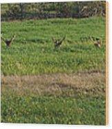 Bull Elk At Dean Creek Wood Print