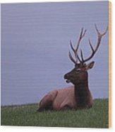 Bull Elk At Dusk Wood Print