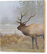 Bull Elk Bugles Loves In The Air Wood Print