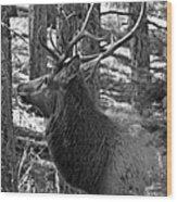 Bull Elk Bw Wood Print