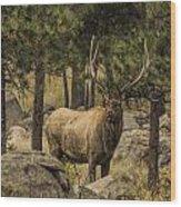 Bull Elk In Forest Wood Print