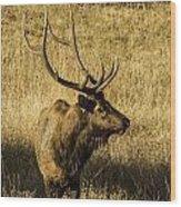 Bull Elk In Meadow Wood Print