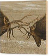 Bull Elk In The Rut   #8924 Wood Print