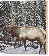Bull Elk In The Woods Wood Print