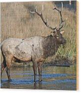 Bull Elk On The Madison River Wood Print