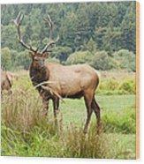 Bull Elk On Watch Wood Print