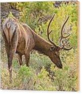 Bull Elk Profile Wood Print