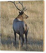Bull Elk Surveying His Harem Wood Print by Bruce Gourley