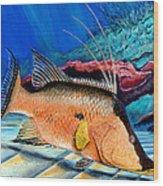 Bull Hogfish Wood Print