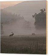 Cataloochee Valley Wood Print