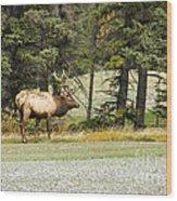 Bull In Waiting Wood Print