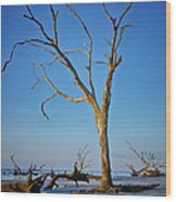 Bull Island South Carolina Wood Print