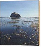 Bull Kelp Bay Wood Print