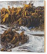 Bull Kelp Durvillaea Antarctica Blades In Surf Wood Print