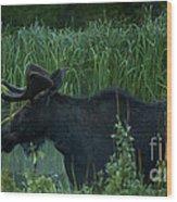 Bull Moose   #5701 Wood Print