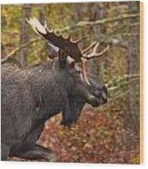 Bull Moose II Wood Print