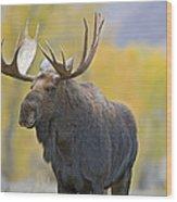 Bull Moose In Autumn Wood Print