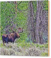 Bull Moose In Gros Ventre Campground In Grand Tetons National Park-wyoming Wood Print