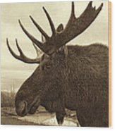 Bull Moose In Sepia Wood Print
