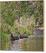 Bull Moose Summertime Spa Wood Print