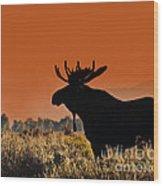 Bull Moose Sunset Wood Print