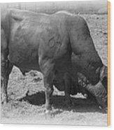Bull Number 07 Wood Print by Daniel Hagerman