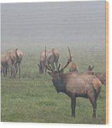 Bull Of The Woods Wood Print