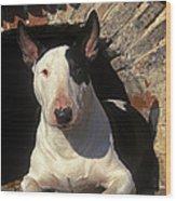 Bull Terrier Dog Wood Print
