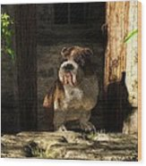 Bulldog In A Doorway Wood Print