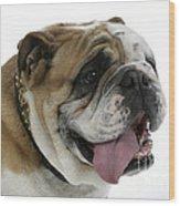 Bulldog, Male Panting Wood Print