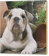 Bulldog Puppy With Flowerpots Wood Print