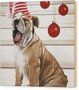 Holiday Bulldog Puppy  Wood Print