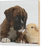 Bulldog Puppy With Yellow Guinea Pig Wood Print