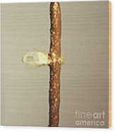 Bullet Piercing Pretzel Stick Wood Print by Gary S. Settles