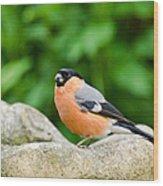 Bullfinch Wood Print