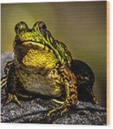 Bullfrog Watching Wood Print