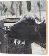 Bulls Cry Wood Print