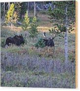 Bulls In The Meadow Wood Print