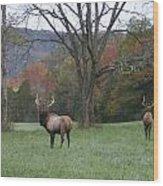 Bulls Of Fall Wood Print