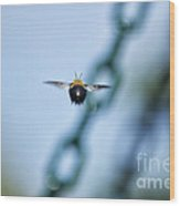 Bumble Bee 01 Wood Print