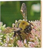 Bumble Bee 104 Wood Print