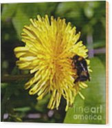 Bumble Bee And Dandelion Wood Print