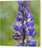 Bumble Bee And Lupine Wood Print