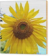 Bumble Bee And Sunflower Wood Print