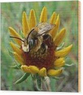 Bumble Bee Beauty Wood Print